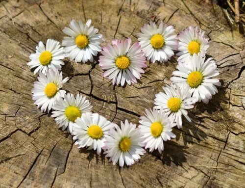 Blommor och blad gör dig glad